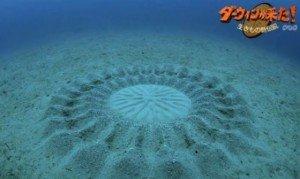 Cercles mystérieux en fond de mer dans CROP CIRCLES dessin_poisson-300x179