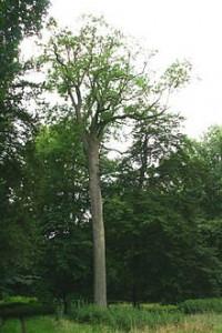 S'autoriser à penser dans PENSEE frêne-200x300