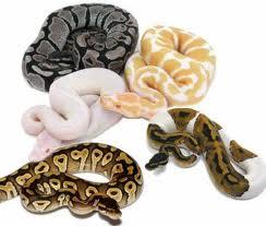 L'année du Serpent dans 2013 - PREDICTIONS images-3