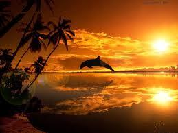 Sagesse intérieure dans DEVELOPPEMENT dauphins