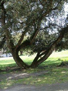 L'arbre et le Cercle dans CHAKRAS 008-225x300