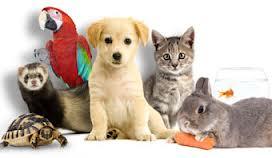 Les animaux, êtres conscients et responsables dans ANIMAUX images-10