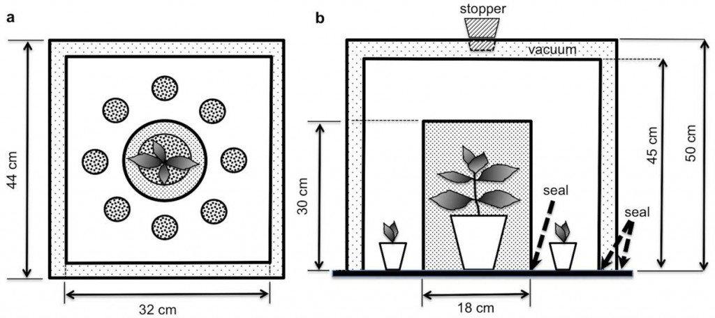 Les plantes entendent dans PLANTES plantes-entendent