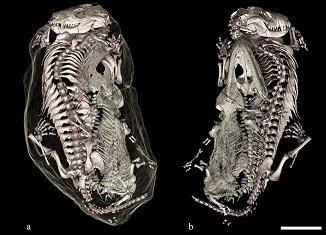 un terrier fossile dans ANIMAUX prehis3