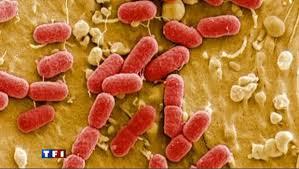 Accord au sommet avec les bactéries dans ACCORD telechargement-9
