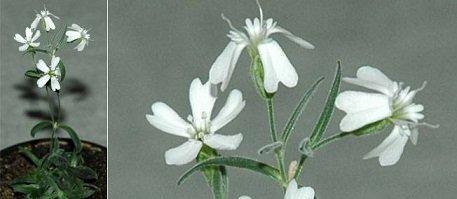 fleur-une-510061-jpg_348986
