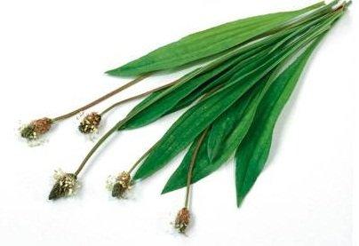 plantin-1738050-jpg_1597231