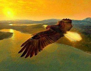 aigle-soleil