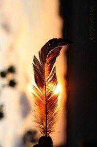 plume_coucher_de_soleil