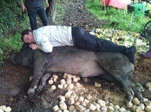 avec-cochon